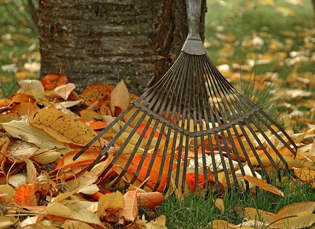 hrábě na listí